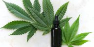 green cannabis leaves and black glass drops bottle